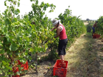 Italian harvest 2012