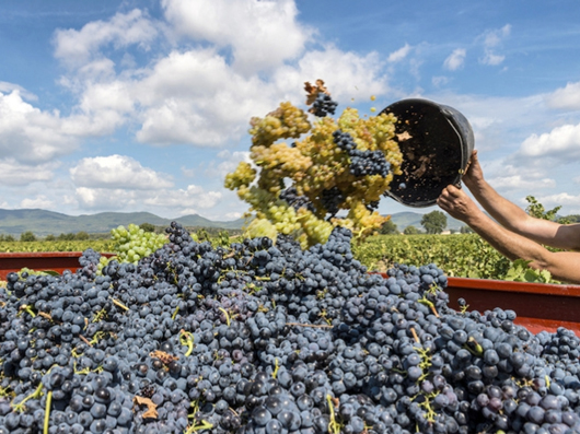 Harvest 2016: One, Two, Three, Go!